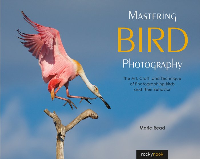 Bryan Petersons Understanding Composition Field Guide How to See and Photograph Images with Impact